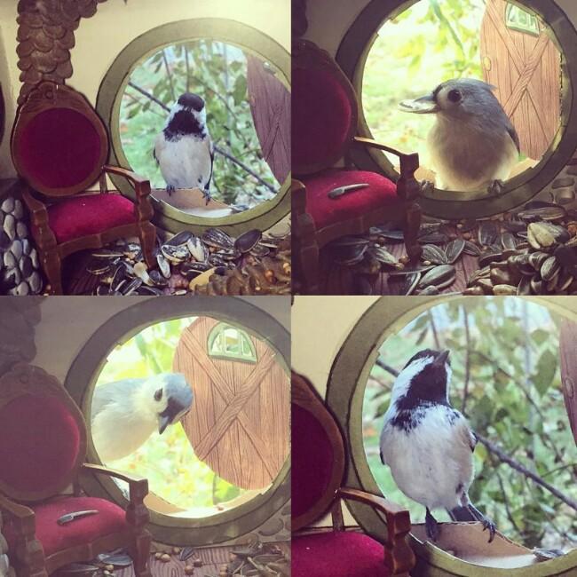 Tiny houses for birds