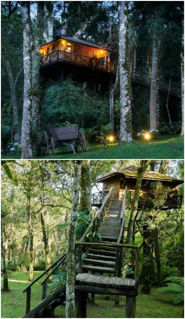Monte Verde Tree House