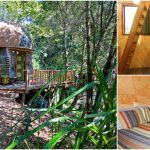 Stay in the Mushroom Dome Tiny House in Aptos, California, the #1 Airbnb Rental!