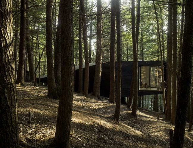 The Half-Tree House is Like No Tree House You Have Ever Seen