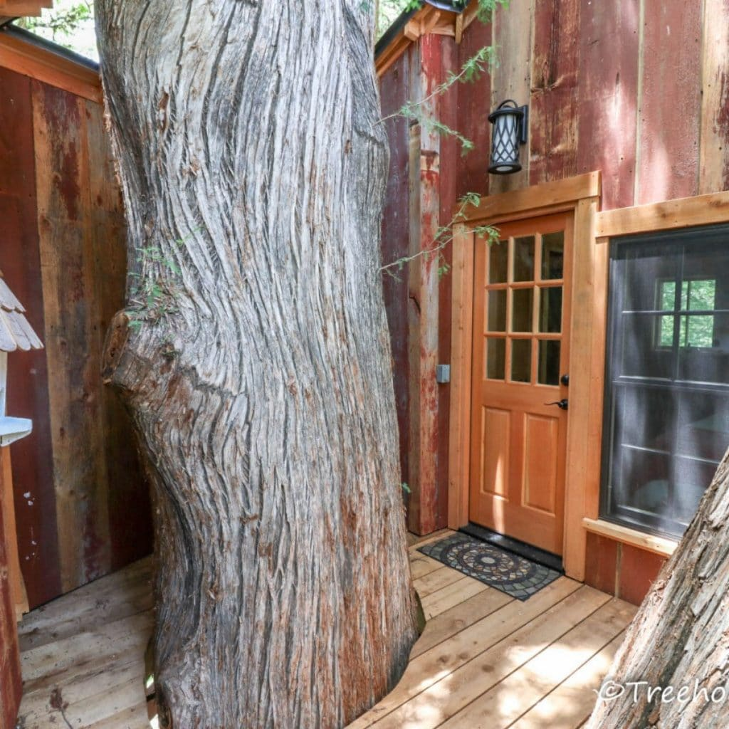 Door to treehouse