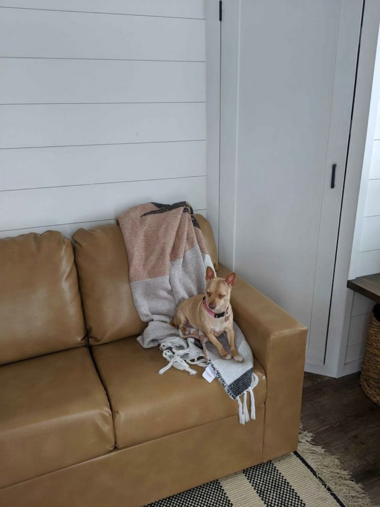 Brown leather sofa with dog in corner
